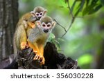 squirrel monkey small cute baby  | Shutterstock . vector #356030228