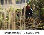 Gardener tending garden