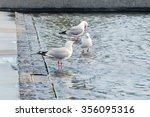 Three Seagulls Are Taking A...