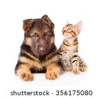 Stock photo little bengal cat and german shepherd puppy dog lying together isolated on white background 356175080