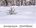 Winter Snowy Forest Landscape