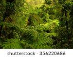 rainforest near cairns  north... | Shutterstock . vector #356220686