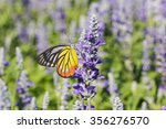 Monarch Butterfly On The ...