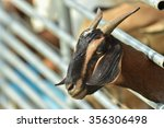goat in the cage  zoo   funny... | Shutterstock . vector #356306498