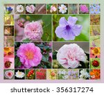floral collage  | Shutterstock . vector #356317274