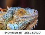 Close Up Macro Of Animal Eye....