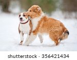 Two Puppies Playing In Winter