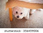 cute white maltese dog hiding... | Shutterstock . vector #356459006