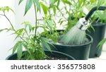 watering potted marijuana... | Shutterstock . vector #356575808