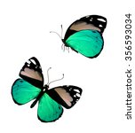 Two Color Butterfly  Isolated...