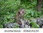 cute monkeys a cute monkey... | Shutterstock . vector #356614124