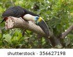 toucan  ramphastos toco ...   Shutterstock . vector #356627198