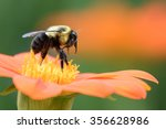 Bee Moving From Flower To...
