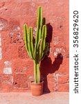 Cactus In Santa Catalina...