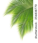green coconut leaf isolated on... | Shutterstock . vector #356838770