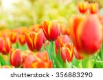 colorful spring flowers tulips | Shutterstock . vector #356883290