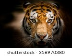 Dangerous Look Wild Tiger Clos...