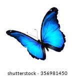 Stock photo blue butterfly isolated on white 356981450