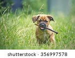 Stock photo puppy playing 356997578