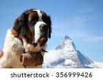 St. Bernard Rescue Dog In...