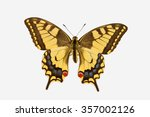 Rare Swallowtail Butterfly ...