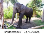 very long ivory thai elephant. | Shutterstock . vector #357109826