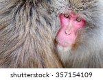 Portrait Of Monkey Japanese...