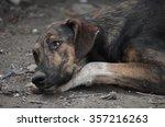 dog | Shutterstock . vector #357216263