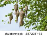 Baya Weaver Bird Nest At A...