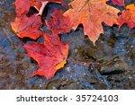 Fallen Maple Leaves In Autumn