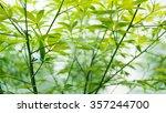 marijuana leaf and plant... | Shutterstock . vector #357244700