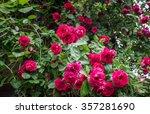 Stock photo rose garden on countryside in mazovia region poland 357281690