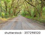 A Dirt Road On Edisto Island...