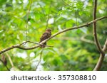 beautiful bird. large tailed... | Shutterstock . vector #357308810