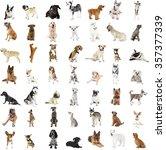 Stock photo large group of dog breeds isolated on white 357377339