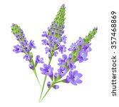 Purple Flowers. Verbena ....