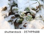 Frozen Fern Snow  Leaves And...