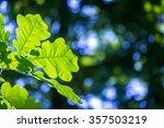 oak leaves at the university... | Shutterstock . vector #357503219