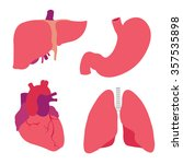 human organs. heart  liver ... | Shutterstock .eps vector #357535898