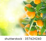 Garden With Tangerine Tree...