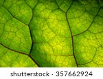 close up view of green leaf and ... | Shutterstock . vector #357662924