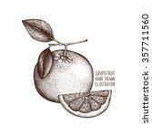 ink hand drawn grapefruit... | Shutterstock .eps vector #357711560