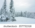 Snow Covered Trees At The...
