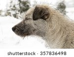 dog in the snow | Shutterstock . vector #357836498