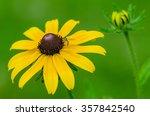 Bee On Yellow Black Eyed Susan...