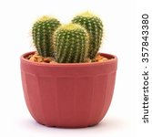 cactus isolated on white... | Shutterstock . vector #357843380