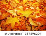 Colourful Autumn Leaves...