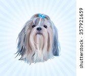 Shih Tzu Dog Portrait In Blue...