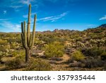 Saguaro Cactus In Arizona...