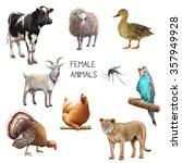 Illustration Of Female Animals...